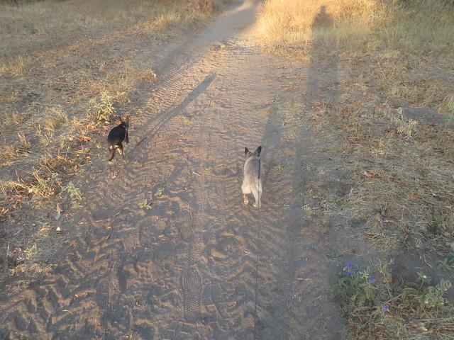 Dog Conversation  August 12, Canon POWERSHOT SX720 HS