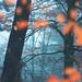 Il Monte Lesima è il cuore dellAppennino delle quattro province una zona montana e boschiva che tocca le province di Pavia Alessandria Piacenza e Genova Silenzio luci e colori creano latmosfera di questi boschi