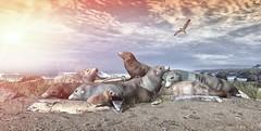 [STUDIOWORX] - Wildlife: USA - Lunch Break