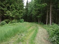 Lysløpa Trostebekk Gård Utfor - Prestegårdsskogen