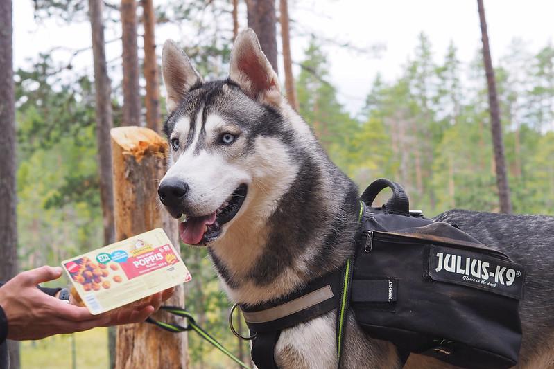 helvetinjärvi koiran kanssa