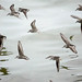 Reflecting on Sandpipers by Trevdog67