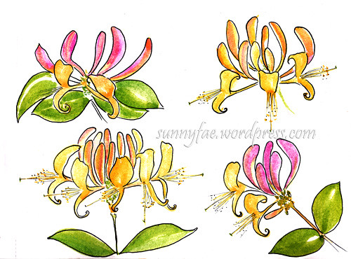 honeysuckle painting outlined with a fountain pen