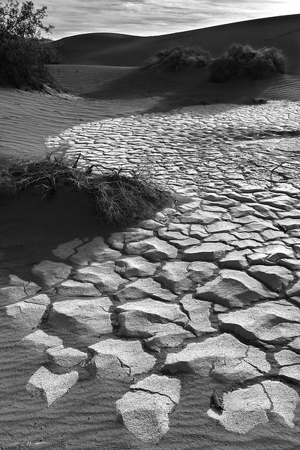 Desert Tesselation