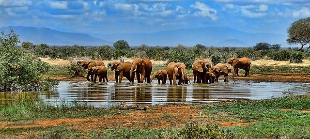 elephant-1065632_1280