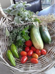 Today's harvest on June 23, 2018