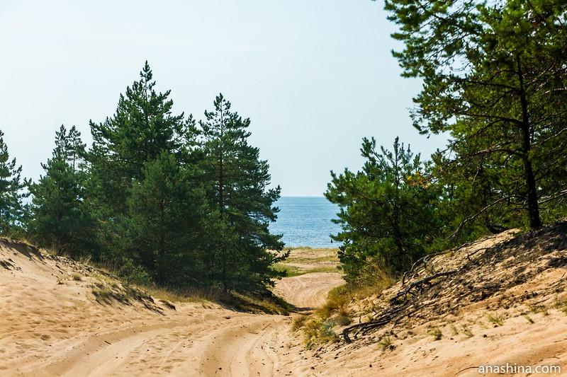 Прибрежные дюны около бухты Окунёвая, Балтийское море