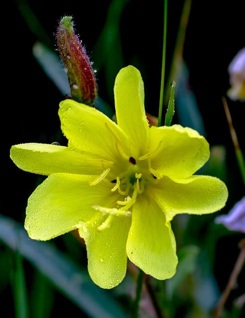 Wild-Flower-10-7D1-073118