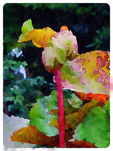 Ligularia plant with large leaves and yellow daisy-like flowers in the photo app Waterlogue