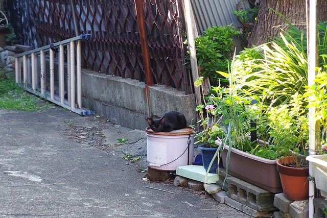 Today's Cat@2018-08-19