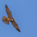 Hobby by cogs2011