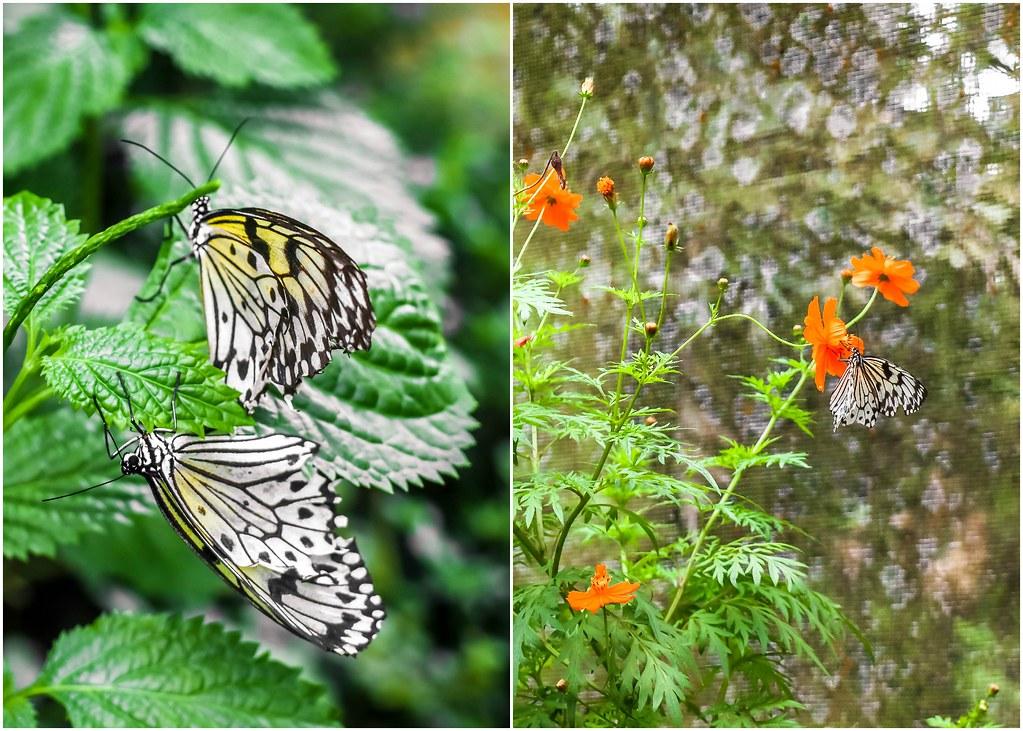 butterfly-garden-davao-alexisjetsets