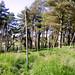 Barley, Aitken Wood - Pendle Sculpture Park (14)