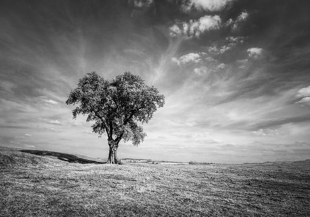 On a hillside desolate