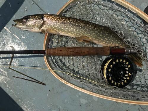 #saintcroixriver #minnesota #flyfishing #warmaterflyfishing #scientificanglers #ciel #blueskyblue #bassonthefly