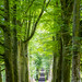 Tree-lined driveway to Drummond Castle