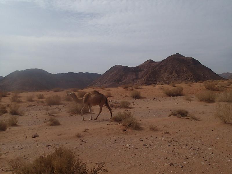 Sat, 2017-11-18 10:03 - Camel