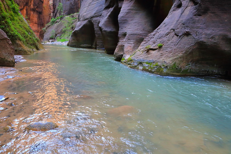 IMG_1988 The Narrows, Zion National Park
