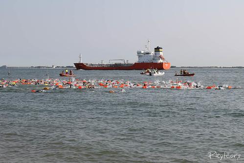 Zeezwemtocht: Vlissingen - Zoutelande<br/>54 foto's