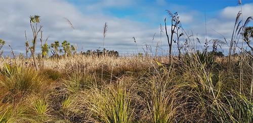 Otukaikino Wetland