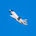 Lockheed Martin F-35 Lightning II 2018-02.jpg