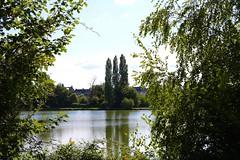 Comme un salut scout, l'étang de Saint-Aubin-du-Cormier, Bretagne - Photo of Mecé