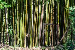 01-Bambou