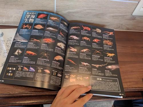 深海水族館のガイドブック