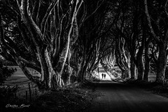 Ireland 2018 - Dark Dark Hedges