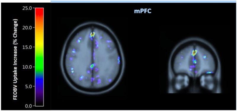 brain-training-5.png