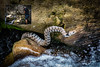 snake-photographer