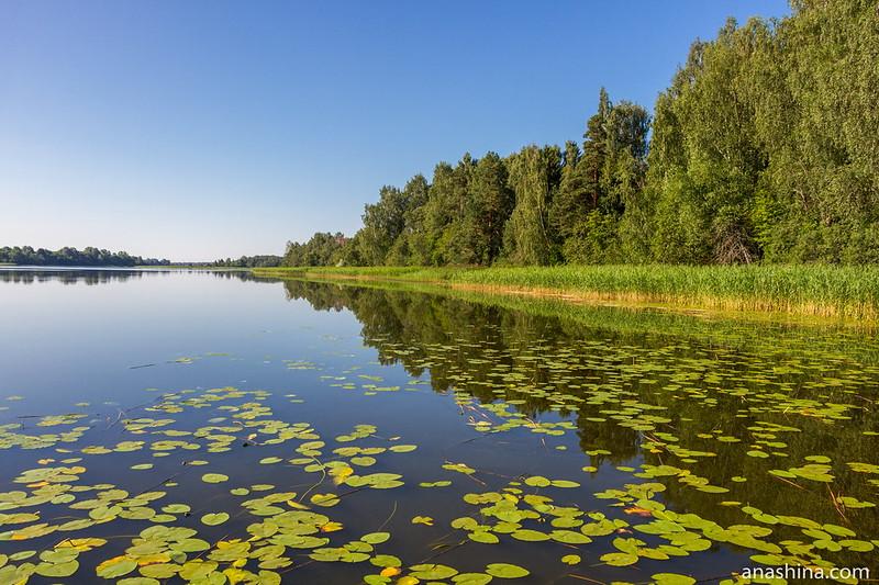 Утро на озере Мстино