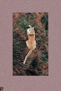 Bežo 10 | Cats Edition 10