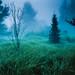 South Meadow, Adirondacks, 1983 by V-A-B