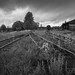 Shiny railroad tracks by Helena Normark