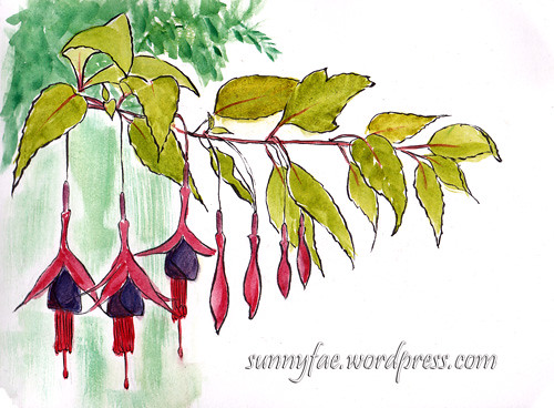 drawing of Fuchsia flowers
