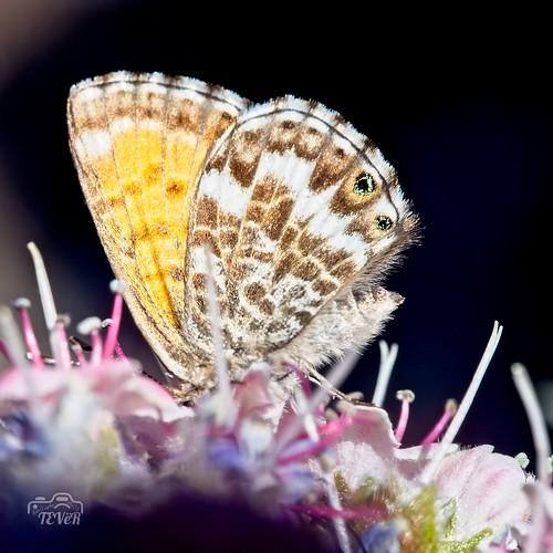 Mariposa (5)