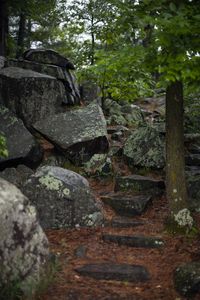 slick steps