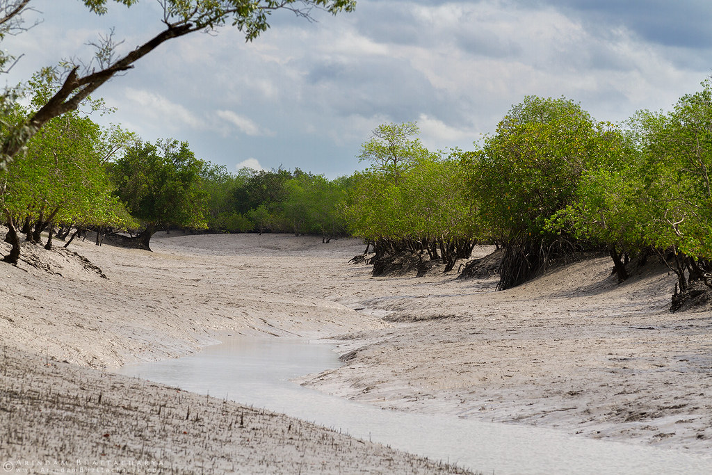 Mangroves patch during the low tide when the water stops failing.