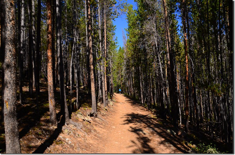 The Meadow Creek Trail winds through a pine forest