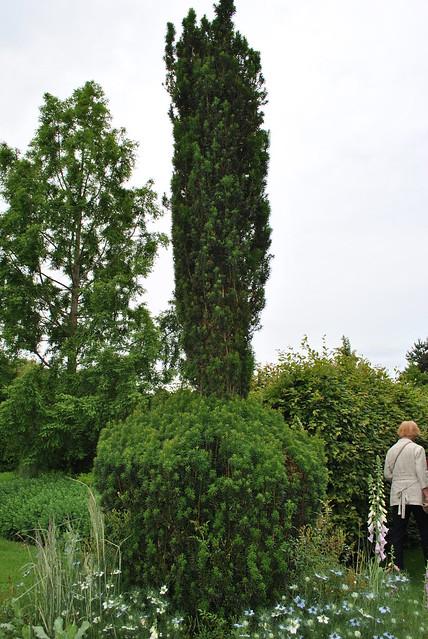Kathy Brown's garden