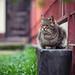 Street cat 206