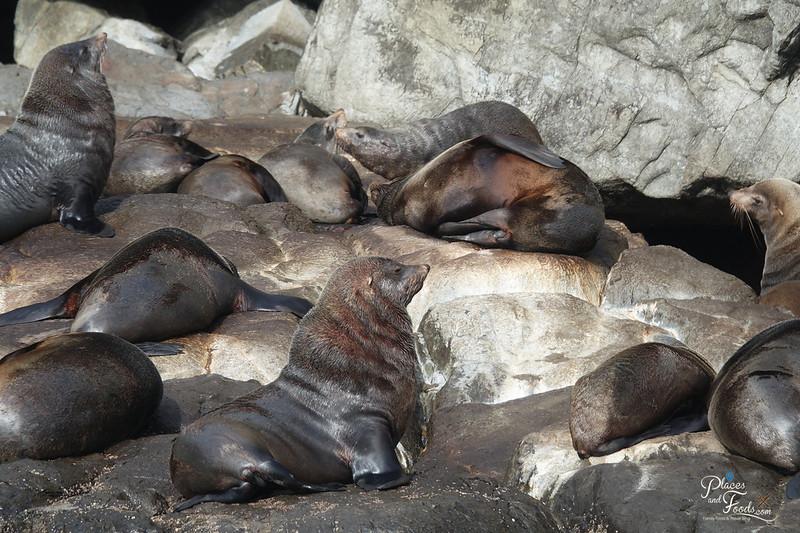tasman island seals