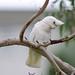 <p><a href=&quot;http://www.flickr.com/people/enyaw007/&quot;>Wayne Ellis1</a> posted a photo:</p>&#xA;&#xA;<p><a href=&quot;http://www.flickr.com/photos/enyaw007/42227907724/&quot; title=&quot;_DSC6991&quot;><img src=&quot;http://farm2.staticflickr.com/1819/42227907724_389071158d_m.jpg&quot; width=&quot;240&quot; height=&quot;159&quot; alt=&quot;_DSC6991&quot; /></a></p>&#xA;&#xA;