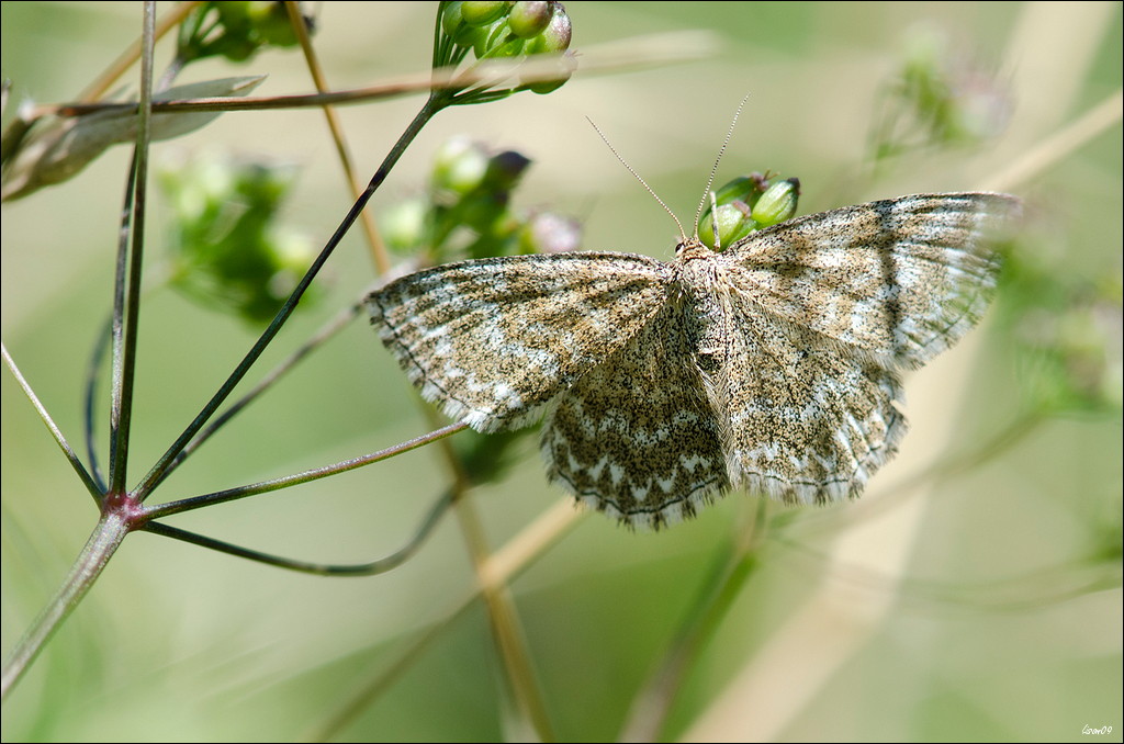 Les papillons du bout du chemin 42246183630_74373843f7_o