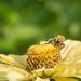 Sommer, Sonne, Bienenzeit!