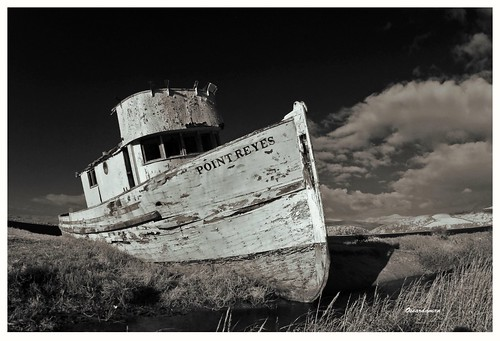 The Tomales Bay Shipwreck, the Inverness Shipwreck, or the S.S. Point Reyes