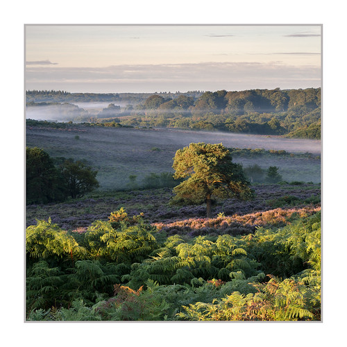bratleyview newforest hampshire tree heath heathland heather mist sunrise
