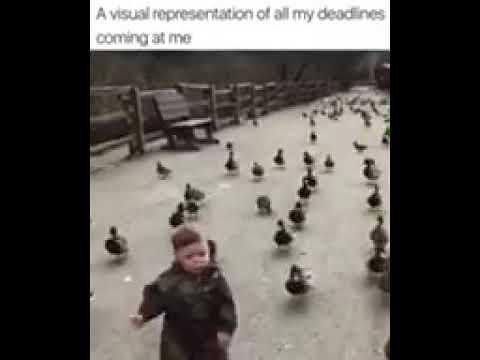 1 million ducks chase a little boy