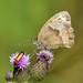 Small Heath Watchtree Nature Reserve N000021 D210bob DSC_3907